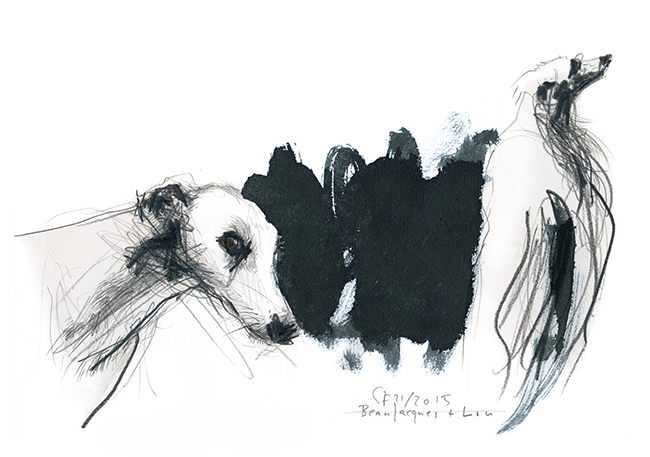 Illustration.dogs.Whippet