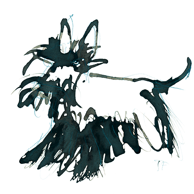 Illustration.dogs.scottish.terrier